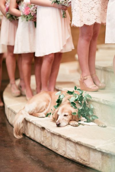 Rustic-Classic-Oaks-Ranch-Wedding-Ideas-wedding-dog
