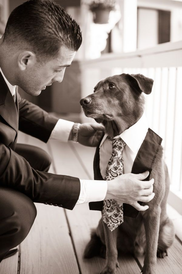 Unique-Wedding-Photos-Creative-Dog-in-Wedding-Pictures