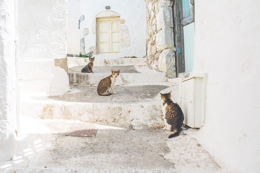 astypalea-cats-greece