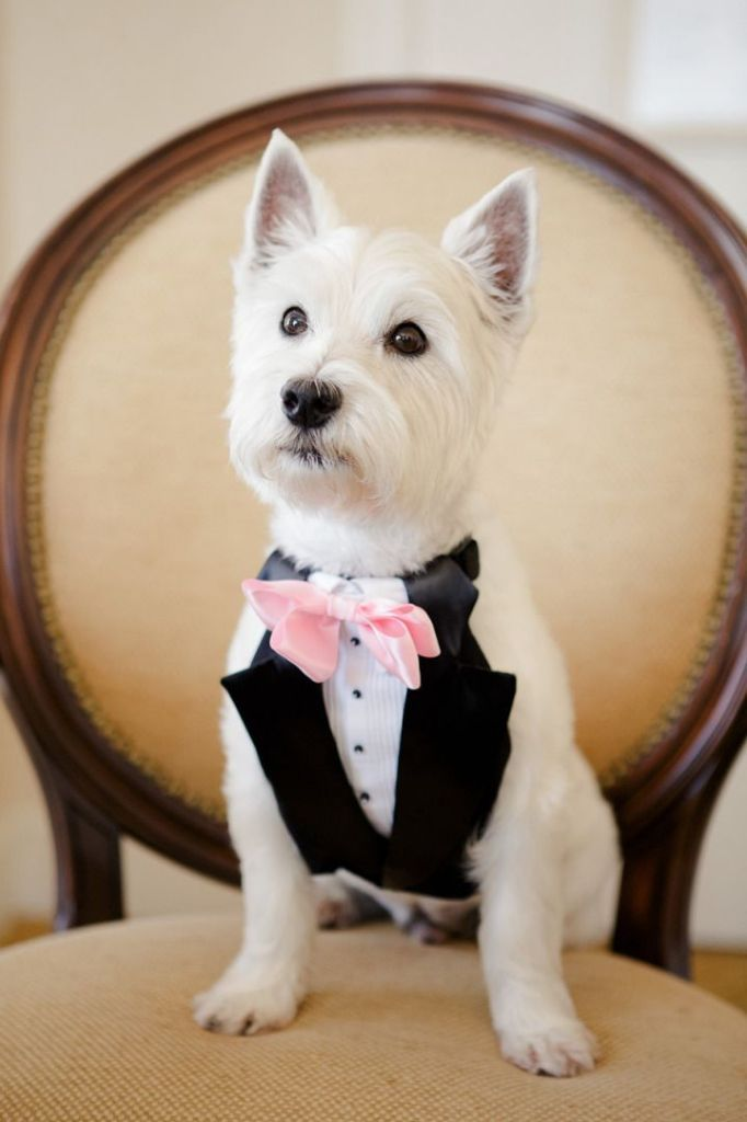 cute dog wedding
