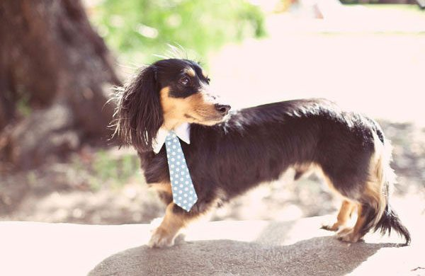small-dog-tie-wedding