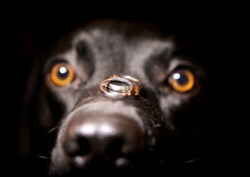 37 Wedding Ring Pictures You Have to Take on Your Big Day