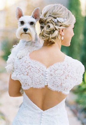 white-dog-bride